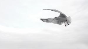 gull-1635683_1920